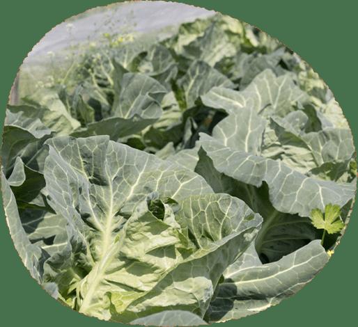 写真:野菜のイメージ4