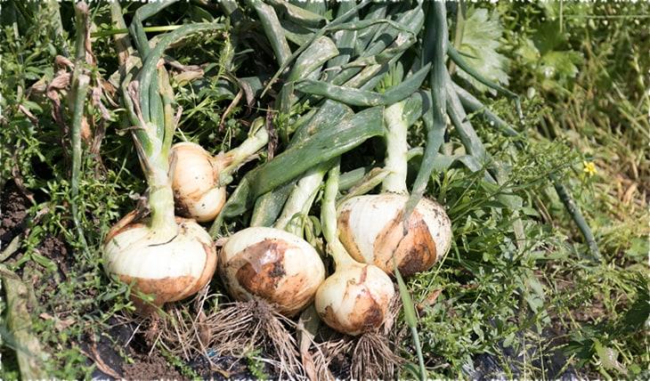 写真:野菜のイメージ